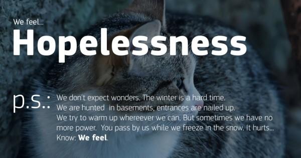 Αυτό το φωτορεπορτάζ με άστεγα ζώα θα σας ταρακουνήσει… (Εικόνες)