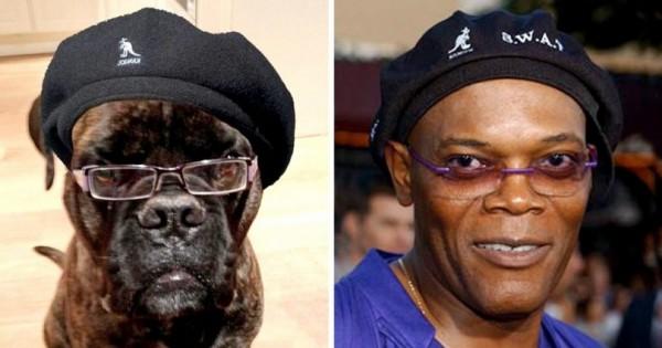 15 Ξεκαρδιστικές Περιπτώσεις Σκύλων που ΚΑΤΙ μας Θυμίζουν… (Εικόνες)