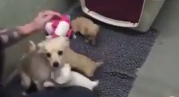 Θηλυκό σκυλί που εγκαταλείφθηκε σε καταφύγιο ξαναβρίσκεται με τα κουτάβια του (Βίντεο)