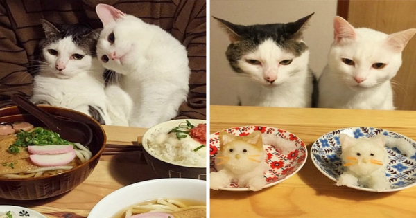 Κάθε Φορά που αυτό το Ζευγάρι Γιαπωνέζων τρώει, οι Γάτες του Τρέχουν στο Τραπέζι και Κάνουν ΑΥΤΟ! (Εικόνες)