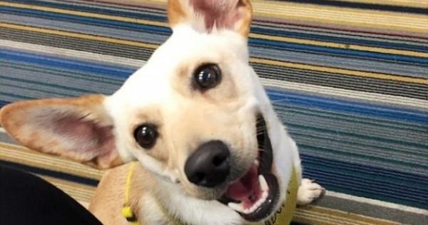 Ξενοδόχοι βρήκαν τον πιο ευφάνταστο τρόπο για να βρουν οικογένειες σε αδέσποτα σκυλιά! (Εικόνες)