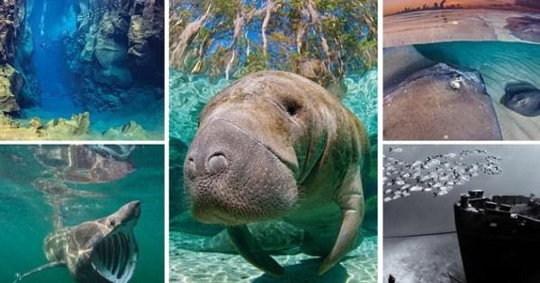 Τα εκθαμβωτικά θαύματα του θαλάσσιου κόσμου (Εικόνες)