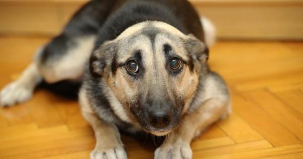 Γιατί τρέμει ο σκύλος μου;