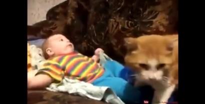 Η γάτα βάζει το μωρό για ύπνο (Βίντεο)