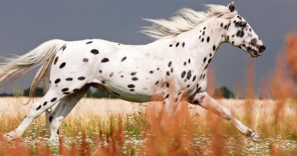 15 εντυπωσιακά όμορφα άλογα! (Εικόνες)