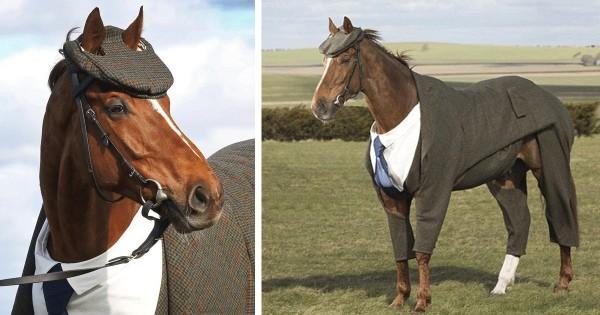 Βρετανικό πρακτορείο στοιχήματος έραψε κουστούμι για άλογο και το αποτέλεσμα είναι απολαυστικό! (Εικόνες)