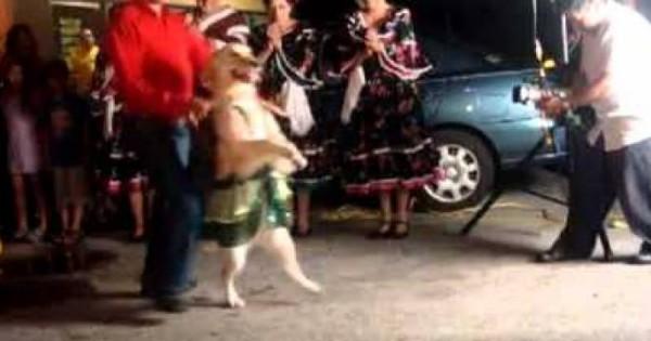 Το πιo απίθανο σκυλί που είδατε ποτέ, χορεύει ! ! (Βίντεο)