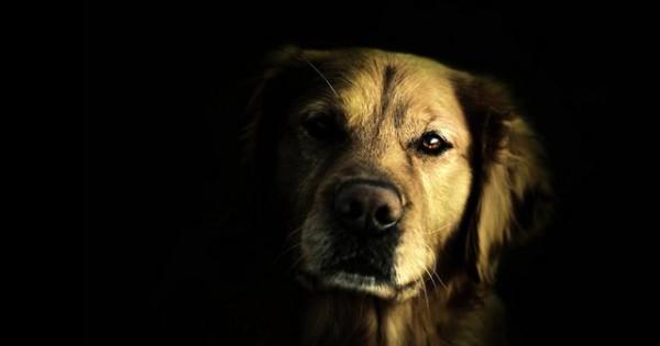 Μπορούν τα σκυλιά μας να δουν στο σκοτάδι; Φοβούνται όπως εμείς; [vds]