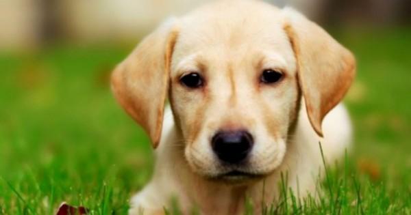 Μάλωσαν τον σκύλο γιατί ήταν άτακτος! Δείτε την ξεκαρδιστική αντίδραση του! (Βίντεο)