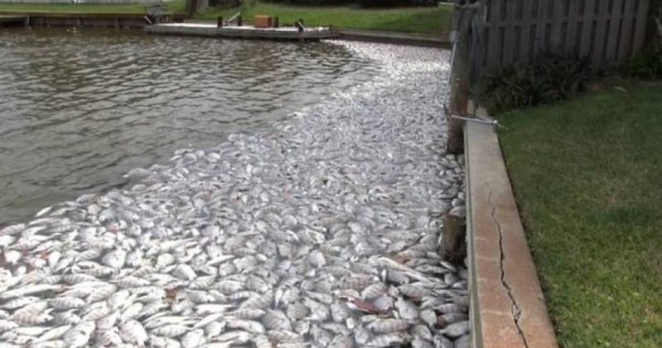 Χιλιάδες ψάρια βρέθηκαν νεκρά στη Φλόριντα [βίντεο]