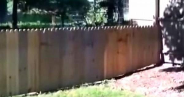 Φτιάχνει φράχτη για να κρατήσει το σκύλο στον κήπο..Δείτε τί γίνεται (vid)
