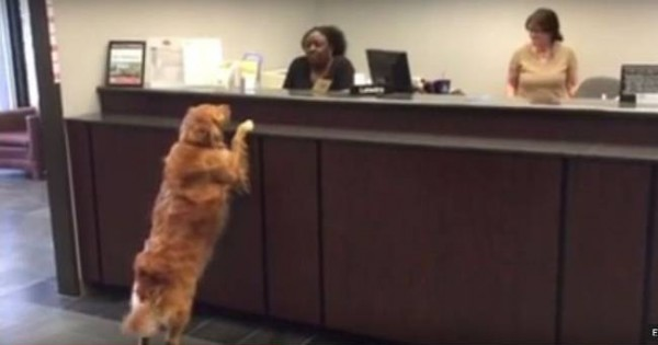 Gracie: Ο πιο παράξενος πελάτης τράπεζας στον κόσμο (Βίντεο)