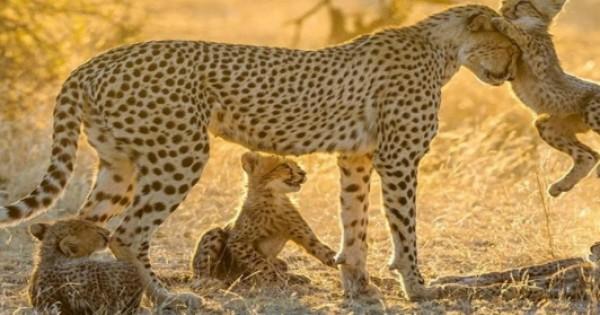 Οι 25 πιο Εκπληκτικές Μαμάδες στο Ζωικό Βασίλειο Φωτογραφίζονται με τα Μικρά τους (Εικόνες)