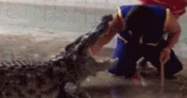 Βίντεο – σοκ: Γλίστρησε και έπεσε στο λάκκο με τους κροκόδειλους! (Βίντεο)