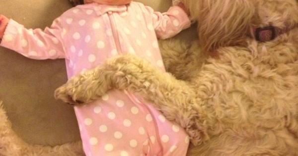 Όταν ο Σκύλος βάζει το μωρό για ύπνο… 18 Τρυφερές εικόνες!