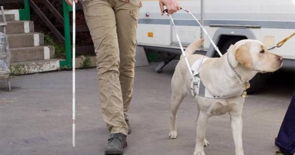 Τυφλοί «βλέπουν» τη ζώη μέσα από τα μάτια των σκύλων οδηγών τους