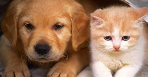 7+5 τρικ που όλοι οι ιδιοκτήτες σκύλου ή γάτας πρέπει να ξέρουν [βίντεο]