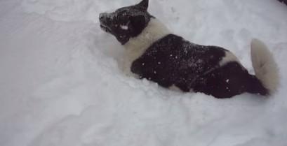 Ένας σκύλος απολαμβάνει το χιόνι στην Καστοριά (Bίντεο)