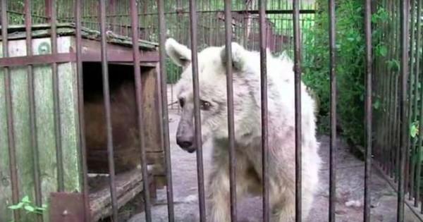 Η διάσωση και η εντυπωσιακή μεταμόρφωση μιας αρκούδας