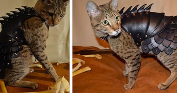 Και όμως είναι Αλήθεια… Μια εταιρία πουλάει Δερμάτινες Πανοπλίες για Γάτες! (Εικόνες)