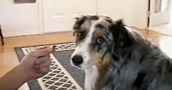 Αρνείται να φάει για ΑΥΤΟ τον Ξεκαρδιστικό Λόγο… Θα Λιώσετε! (Βίντεο)