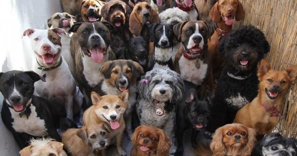 Ποια από αυτές τις 10 ράτσες σκύλων είναι η πιο… Χαδιάρικη; (φωτό)