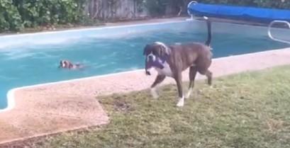 Ο σκύλος τρολάρει τον φίλο του (Βίντεο)