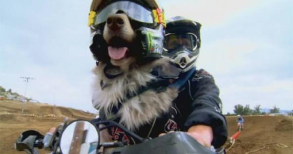 Ο σκύλος που βάζει τα … «γυαλιά» σε πολλούς easy-rider [βίντεο] f