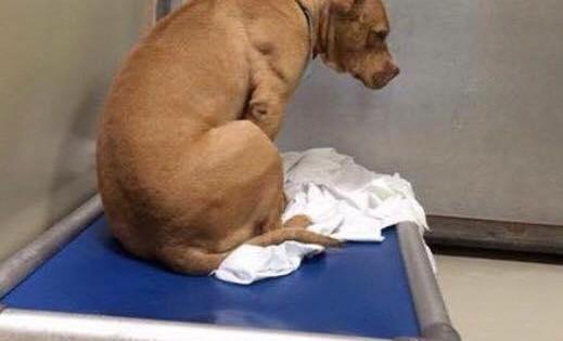 Ο θλιμμένος σκύλος: Ραγίζει καρδιές η ιστορία πίσω από αυτή τη φωτογραφία…