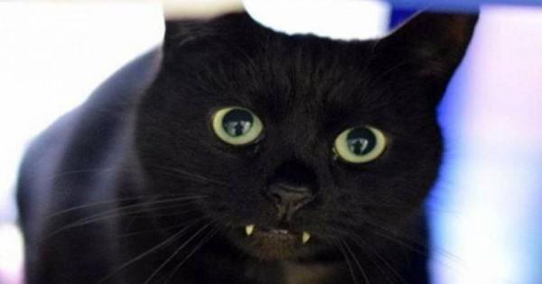 Η γάτα «Κόμης Δράκουλας»! [φωτό]