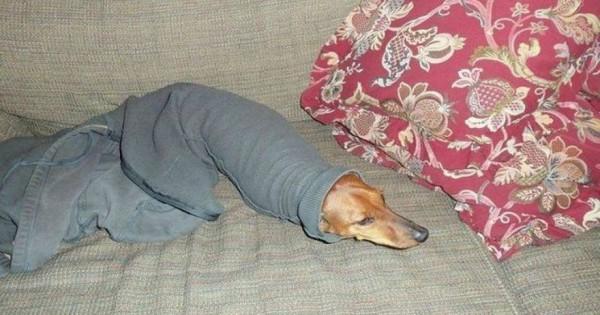 Σκύλοι που ζουν πραγματικά δύσκολες στιγμές! (φωτό)