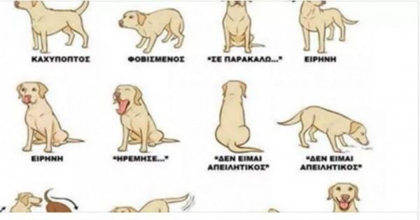 Σινιάλα – Τι σημαίνουν αυτά που σας «λέει» ο σκύλος σας