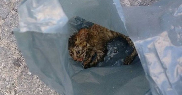 Μια δασκάλα βρήκε αυτό το γατάκι να κλαίει κλεισμένο σε μια σακούλα σκουπιδιών.. Αυτή η ιστορία ραγίζει καρδιές (Εικόνες)