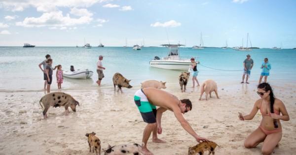 Ένα νησί στις Μπαχάμες όπου κολυμπάς δίπλα σε καθαρά, χαρούμενα γουρούνια