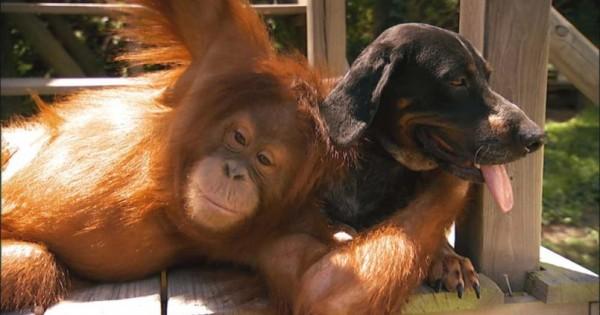 Η Νέα Ζηλανδία αναγνώρισε επίσημα ότι ΟΛΑ τα ζώα είναι όντα με αισθήσεις και συναισθήματα