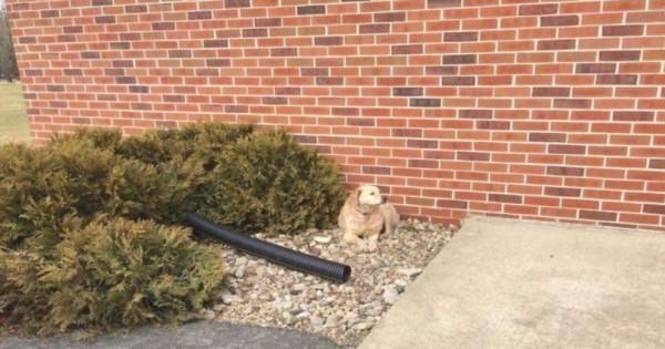 Σκύλος αρνείται να αφήσει τη θέση του έξω από την εκκλησία. Μόλις όμως μάθετε το λόγο… Σπαρακτικό! (Εικόνες)