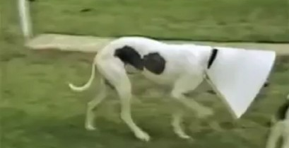 Κίνηση Ματ (Βίντεο)