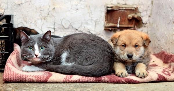 Τρώνε υγιεινά ο σκύλος και η γάτα σας;