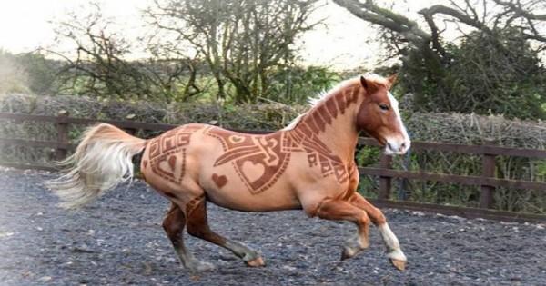 Παράξενα κουρέματα και σχέδια σε άλογα (φωτό)