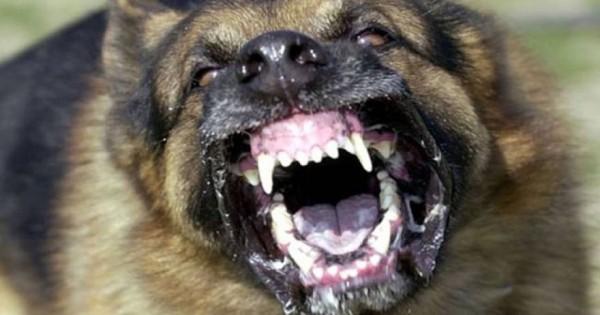 5 πολύ σημαντικά πράγματα που διαισθάνονται οι σκύλοι προτού συμβούν!