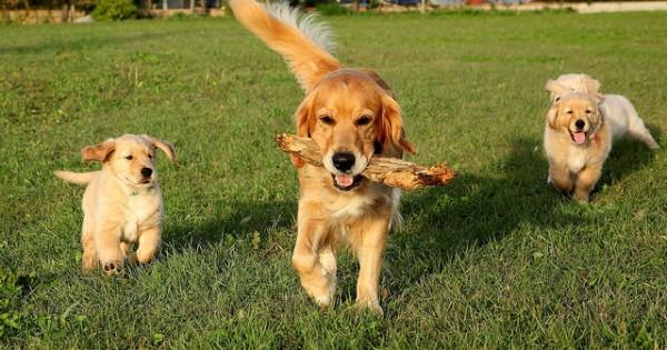 Σκύλος: 5 ιδανικές ράτσες για παιδιά (Εικόνες)