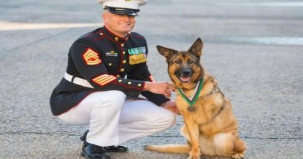 O σκύλος – ήρωας που έχασε το πόδι του για να προστατέψει τους στρατιώτες (vid)
