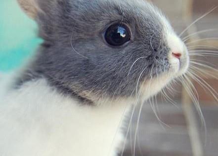 27 κουνελάκια που θα νικήσουν τη βαρεμάρα της βδομάδας! (Εικόνες)