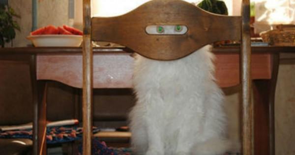30 πονηρές γάτες-νίντζα που δεν θα καταλάβετε καν από που ήρθαν. (Εικόνες)