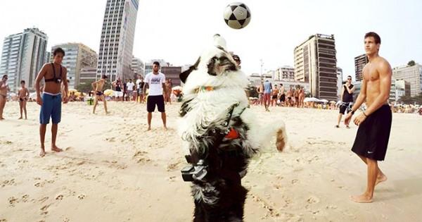 Σκύλος μπαλαδόρος στην Βραζιλία (Video)