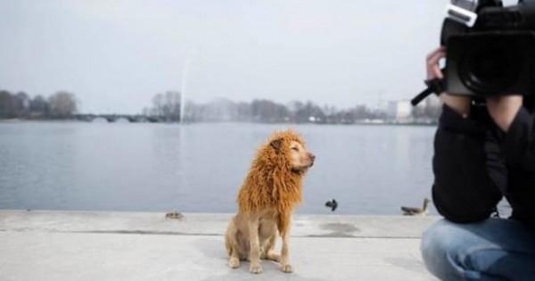 Από αδέσποτος σκύλος, περήφανο λιοντάρι! [photos]