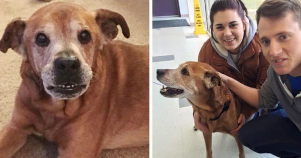 Ζευγάρι επισκέπτετε καταφύγιο για μια δωρεά και φεύγει έναν 17χρονο σκύλο!!