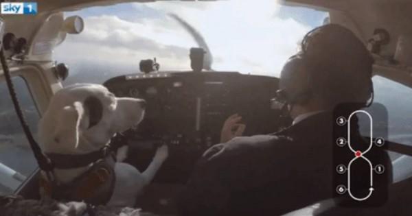 Ο σκύλος που… πιλοτάρει αεροπλάνο!- Από το κατώφλι της ευθανασίας στο κόκπιτ (βίντεο)