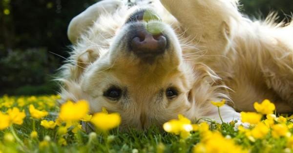 Άνοιξη και αλλεργίες, συμβουλές για τον σκύλο σας!