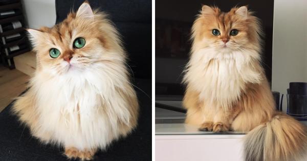 Αυτή η γάτα έχει πάνω από 100.000 followers στο Instagram. O λόγος; Δείτε και θα καταλάβετε!